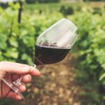 Waarom zijn wijnklimaatkasten zo handig?